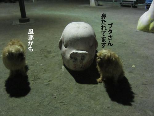 4_convert_20121003145436.jpg