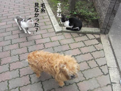 4_convert_20121014162611.jpg