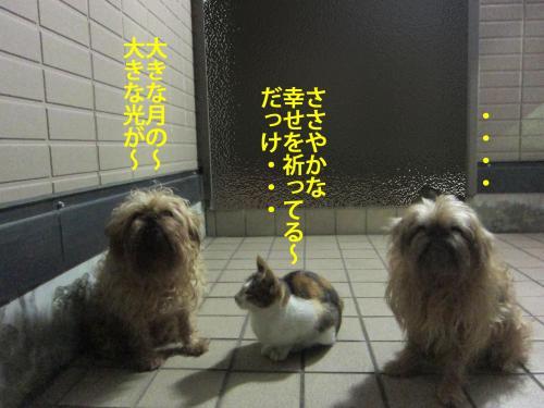 4_convert_20121030170704.jpg