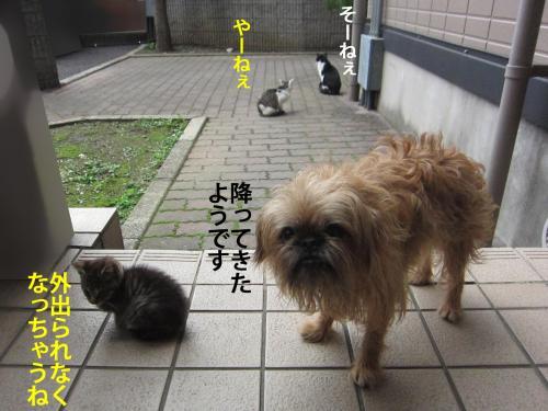 4_convert_20121031152642.jpg