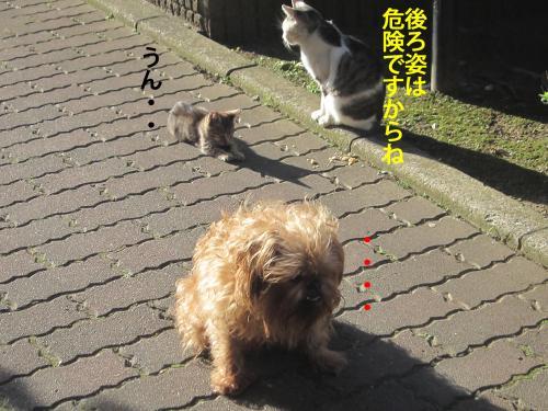 4_convert_20121106175508.jpg