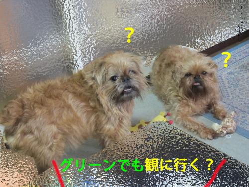 50_convert_20120507103413.jpg