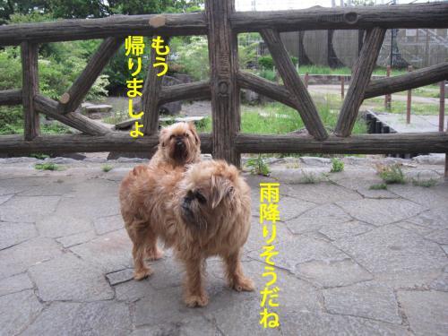 50_convert_20120530103519.jpg