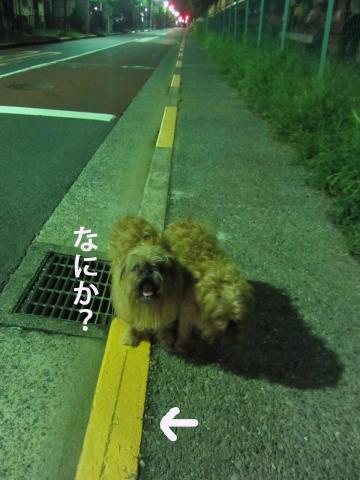 55-0_convert_20121001145021.jpg