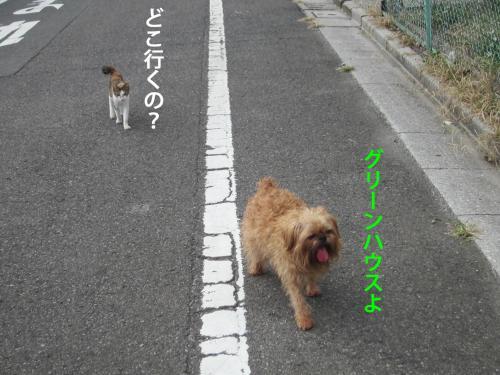55_convert_20121010142413.jpg