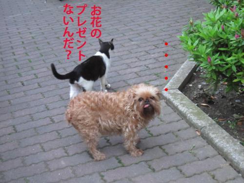 5_convert_20120508110721.jpg