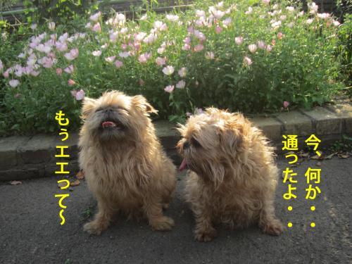 5_convert_20120517111107.jpg