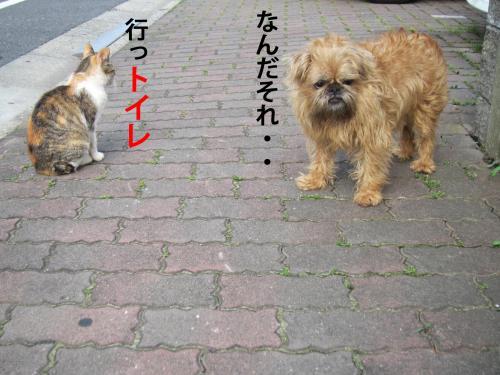 5_convert_20120531103028.jpg