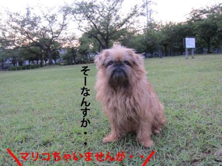 5_convert_20120616114336.jpg