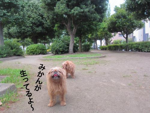 5_convert_20120719124743.jpg