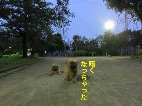 5_convert_20120806140154.jpg