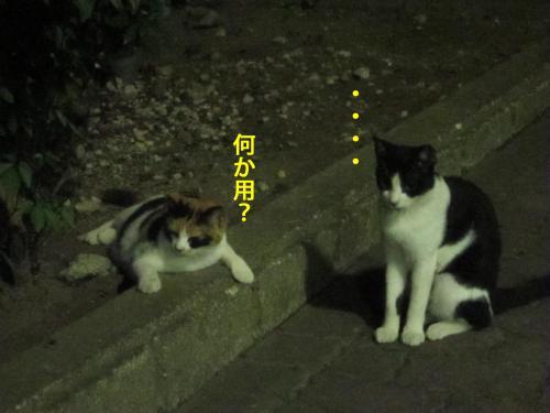 5_convert_20120824131808.jpg