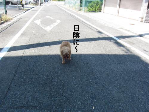 5_convert_20120912150352.jpg