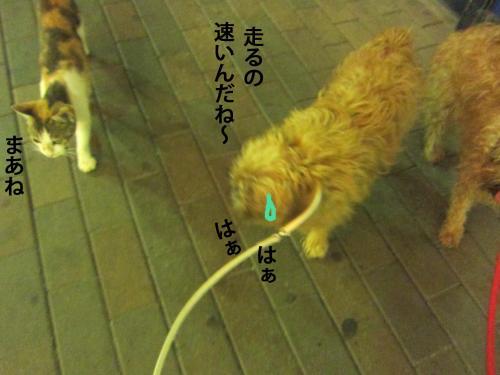 5_convert_20120918141836.jpg