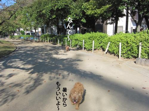 5_convert_20121016160948.jpg