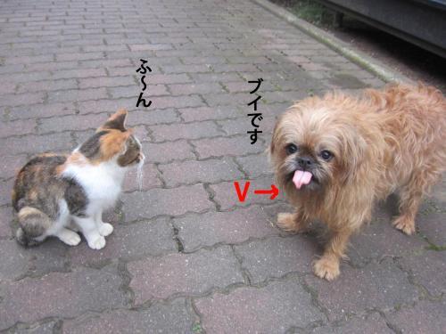 5_convert_20121017171701.jpg