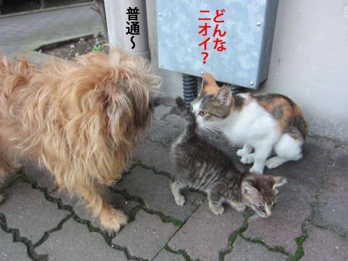 5_convert_20121020160935.jpg
