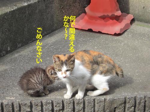 5_convert_20121029162509.jpg