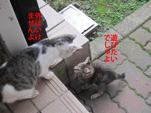 5_convert_20121031152701.jpg
