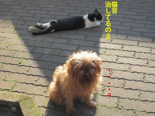 5_convert_20121101170703.jpg