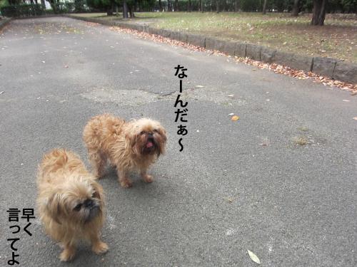 5_convert_20121103150016.jpg