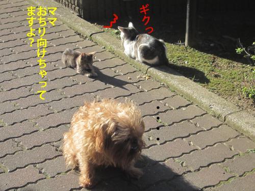 5_convert_20121106180446.jpg