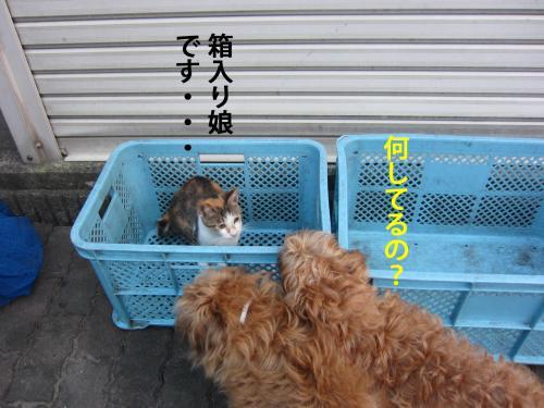 6-0_convert_20120728134409.jpg