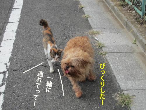66_convert_20121010142435.jpg