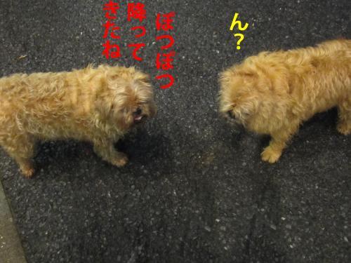 6_convert_20120510100940.jpg