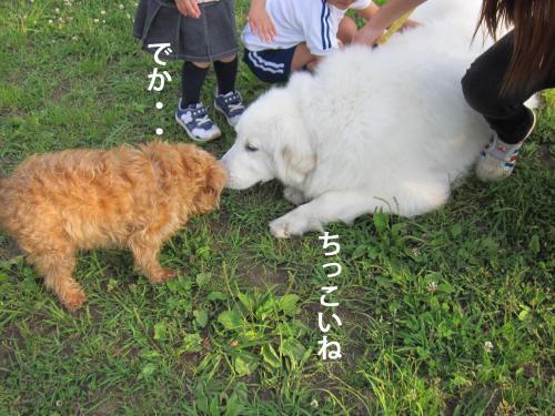 6_convert_20120517093206.jpg