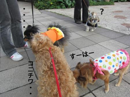6_convert_20120615111540.jpg