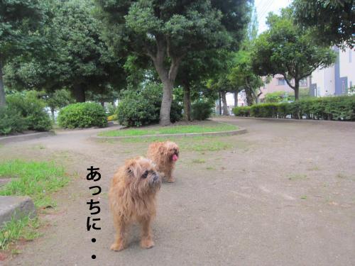 6_convert_20120719124802.jpg