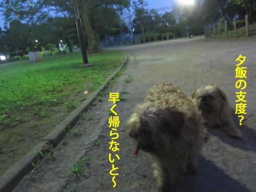 6_convert_20120806140212.jpg