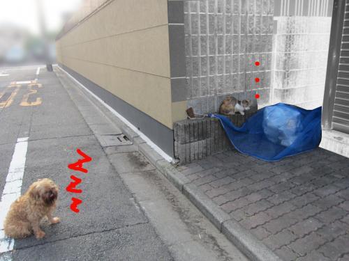 6_convert_20120813145857.jpg