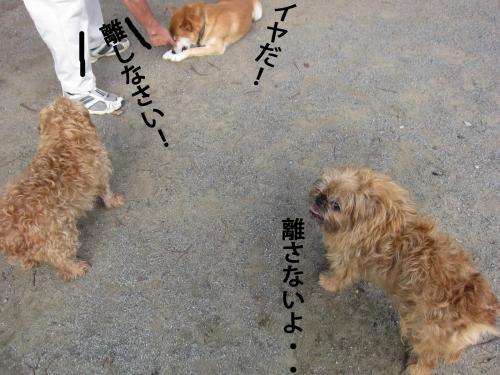 6_convert_20120816145028.jpg