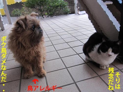 6_convert_20120817121524.jpg
