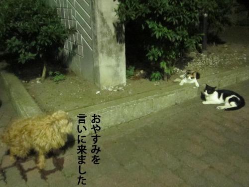6_convert_20120824131827.jpg