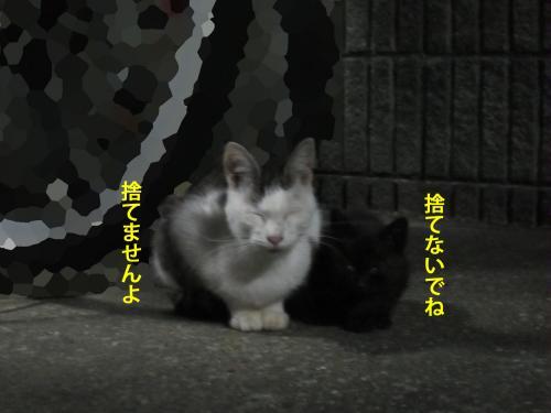 6_convert_20121009164218.jpg