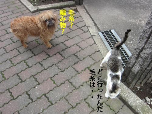 6_convert_20121014162649.jpg