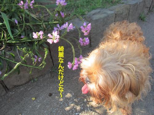 6_convert_20121016161005.jpg