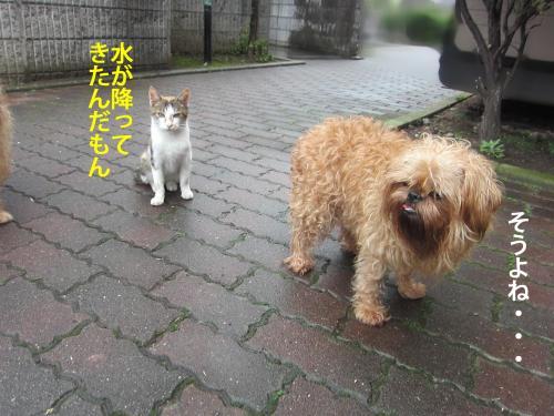 6_convert_20121023163541.jpg