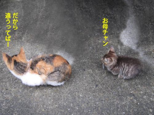 6_convert_20121029162528.jpg