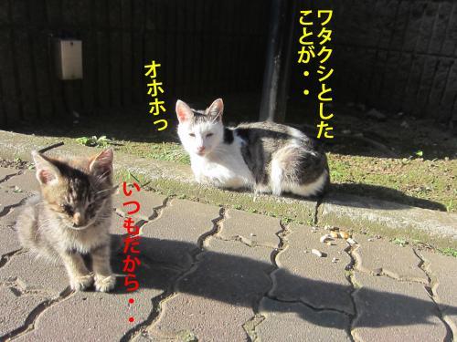 6_convert_20121106175548.jpg