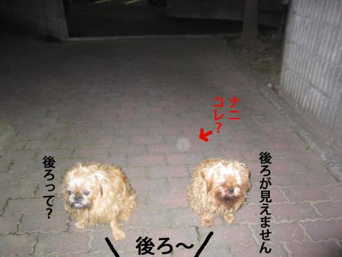 6_convert_20121112131153.jpg