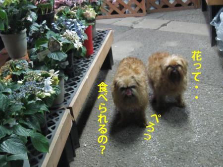 7-0_convert_20120711131356.jpg