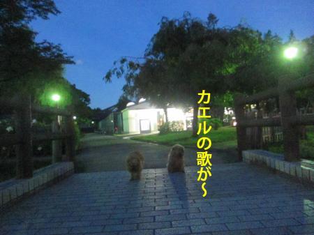 777_convert_20120713113042.jpg