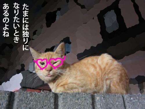 77_convert_20120914154903.jpg