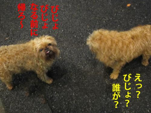 7_convert_20120510100957.jpg