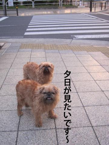 7_convert_20120514102153.jpg