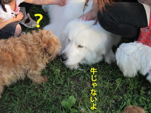 7_convert_20120517093224.jpg